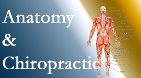 Cox Chiropractic Medicine INC confidently delivers chiropractic care based on knowledge of anatomy to diagnose and treat spine related pain.