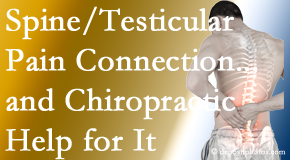 Cox Chiropractic Medicine INC shares recent research on the connection of testicular pain to the spine and how chiropractic care helps its relief.